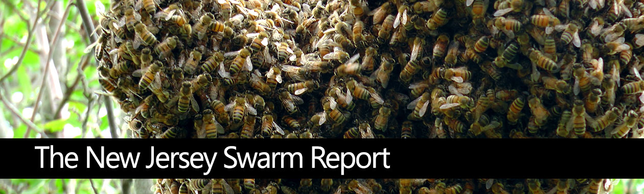 Report Your Swarms in New Jersey